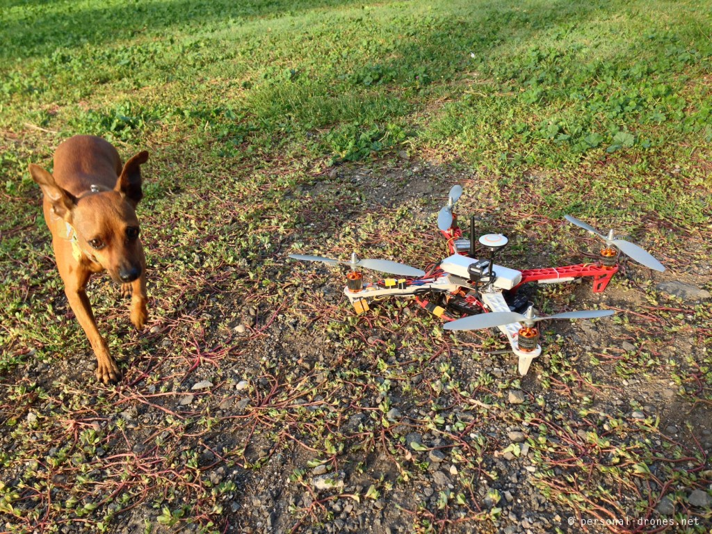 Just like kids, dogs are VERY curious about drones